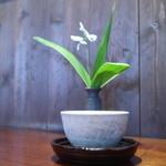 胡蝶庵 仙波 - お茶と花瓶