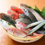 旬の鮮魚を焼物、煮物、お造りに。