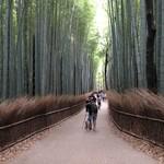 37833222 - 竹林の道