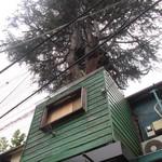 ハイダウェイ - 窓に茂べニア