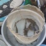 旅籠 ふじ - 店頭では川魚がたくさん泳いでました