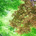38060805 - 新緑アフタヌーンティーの後は、庭園をお散歩