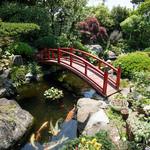 善乃園 - 庭園