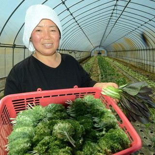 100%国産野菜