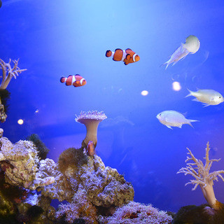 色とりどりの魚たちが心を癒してくれます