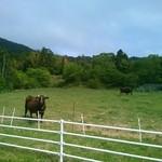 38252761 - 隠岐の島町で車を停めたら近寄って来た、人懐っこい牛君