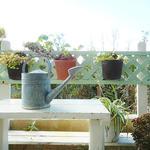 キッチン 赤いフォーク - 日当たりも風通しもよいお庭です