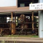 飯田牧場 -