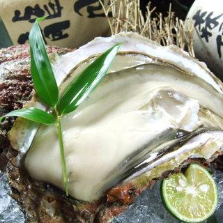 コレが目的のお客様も多い『産地直送生牡蠣』