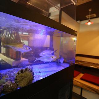 明石昼網・神戸中央市場から直送の鮮魚が泳ぐ生け簀