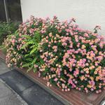 スパイスれすとらん cardamom - 可愛いお花さん達〜♪♪♪\(^o^)/