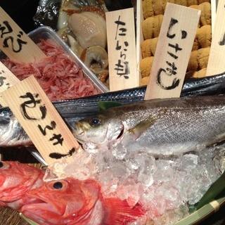 【新鮮魚介】朝獲れの魚たち!