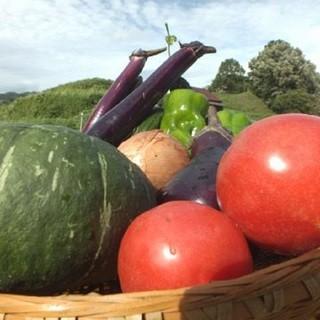 自家栽培の旬の野菜を新鮮な状態で