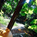 39349278 - お庭とマスカットの葉っぱからの木漏れ日