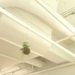サンデーブランチ - 天井はスケルトンな感じ。