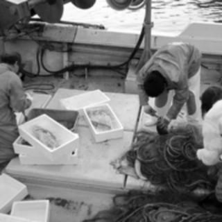 三浦半島の漁師さんから旬の魚を直接買い付けて店舗へ直送!