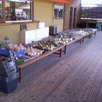 3940088 - お店の外では牧場で出る堆肥を使って育てた朝採れた無農薬野菜も売ってありますよ。