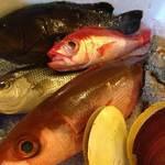 国分寺 魚しげ - 水揚げから12時間の鮮度、味わってください。