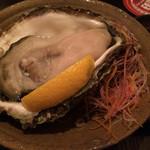 39584512 - 岩牡蠣。