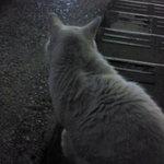 あさと - 近くにいたネコ2