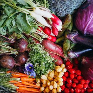 新鮮な季節野菜と厳選した食材を使ったビストロ料理