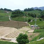 和束茶カフェ - 和束町の茶畑。