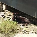 Hygge - 庭には黒猫