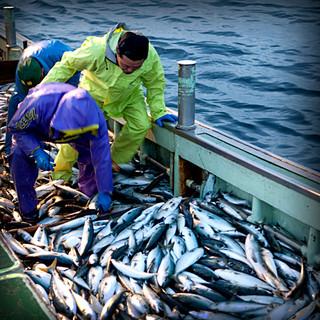 北海道は函館漁港、高知県は土佐清水より直送で届く朝獲れ鮮魚!