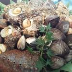 すし処 大 - 新鮮な貝です。