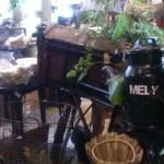 Cafe echelle -