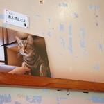 やまねこカフェ - 壁には、ニャンコの写真が数点ありました