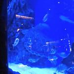 ラグシス - 熱帯魚とウミガメ