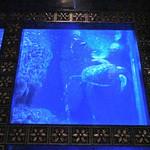 ラグシス - 優雅な泳ぎ