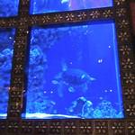 ラグシス - ウミガメに逢えました!!