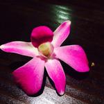 40400121 - サービスのお花❤️