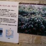 40509322 - 韓国でブラックラズベリー、コリアンラズベリーと言われるこのお酒はワインのようにコクがあります~私は好き!!