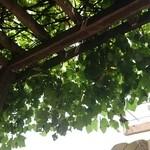 40547803 - ベンチの上は緑の屋根