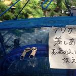 40608343 - 店先に置かれた虫かごの中にはクワガタ(無料)