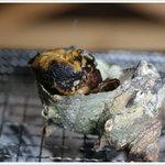 七厘村 - サザエの壷焼き