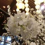 40721513 - 桜の季節に伺いました 2015.3訪問