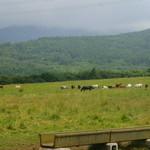 40768839 - お店前の草原には野放しにされた馬たちが