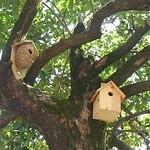 カキノキテラス - 鳥さんは住んでくれるようになるかな。
