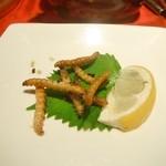 珍獣屋 - 蛾の幼虫