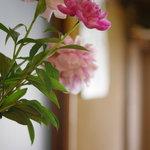 柳ばし にんきや - 柱の芍藥(しやくやく)