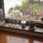 ティーカフェ - 窓際三景-3 コーヒーの木
