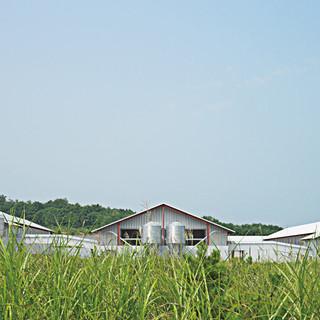 直営農場「山田ガーデンファーム」から届く朝採れ「たまご」