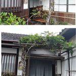 天手古舞 - 天手古舞(刈谷市)食彩品館.jp撮影