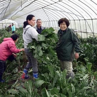 滋賀県認定農家の自家栽培ファーム