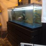 41587587 - 入り口付近の水槽、寂しい魚の数
