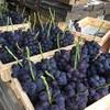 Iwanaminouen - 料理写真:収穫されたふじみのり